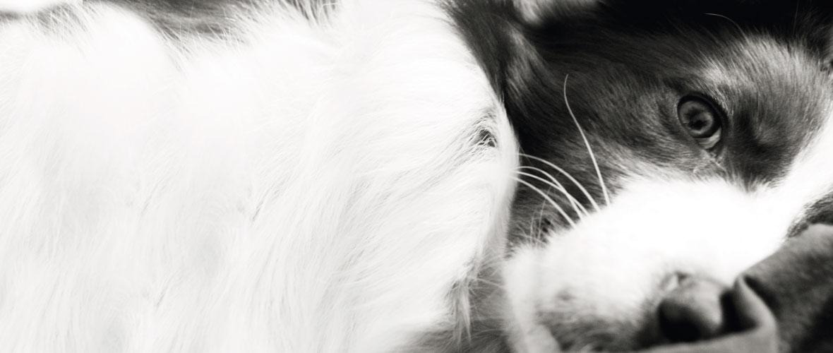 Perros terapéuticos en Andalucía